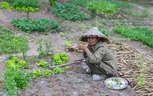 Laos Vietnam 5D 7850 Final 2
