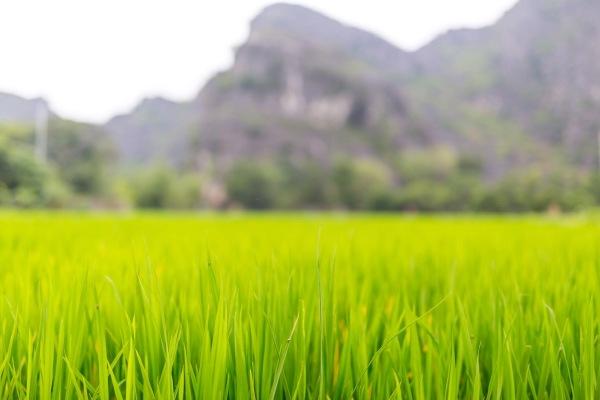 Laos Vietnam 5D 8054 Final