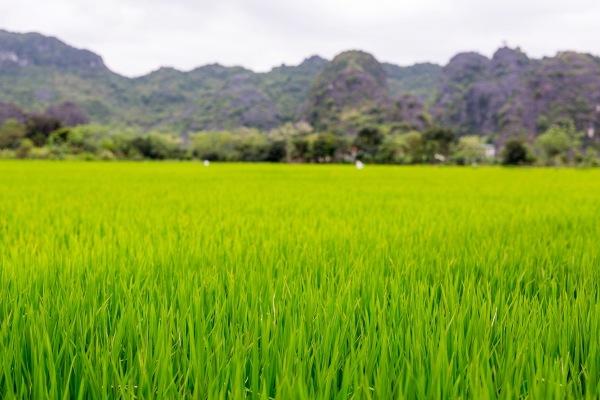 Laos Vietnam 5D 8077 Final