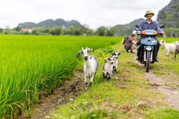 Laos Vietnam 5D 8081 Final