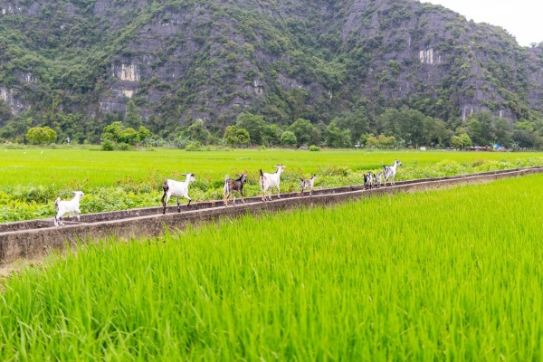 Laos Vietnam 5D 8091 Final
