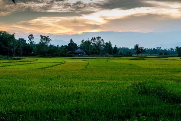 Laos Vietnam 5D 8281 Final